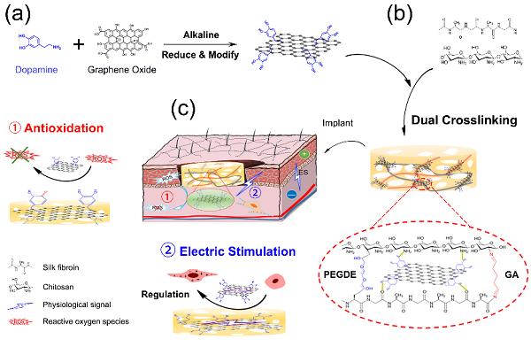 西南交通大学鲁雄教授课题组:多功能电活性仿生支架用于皮肤伤口修复
