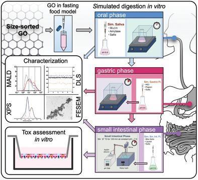 Small:模拟消化过程中氧化石墨烯的合成、物理化学转化及其对人肠上皮体外模型的毒理学评价