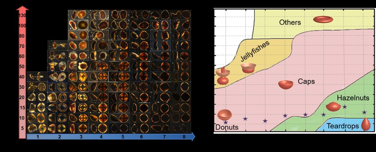 浙江大学高超教授团队在氧化石墨烯液晶的非球形组装取得新进展