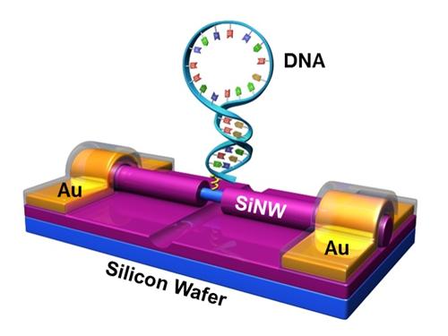 郭雪峰课题组在单分子检测研究领域取得重要进展