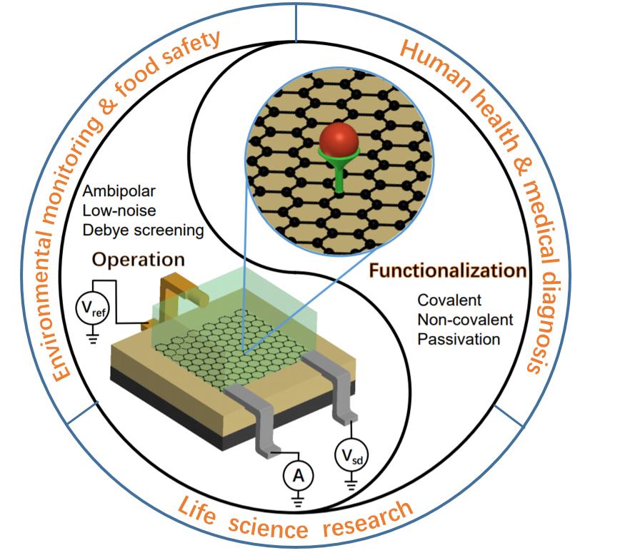 Small:基于石墨烯电学特性的超灵敏场效应生物传感器