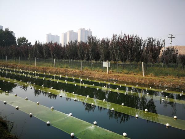 新技术催生治水新方法 江苏校企携手共克环境治理难题
