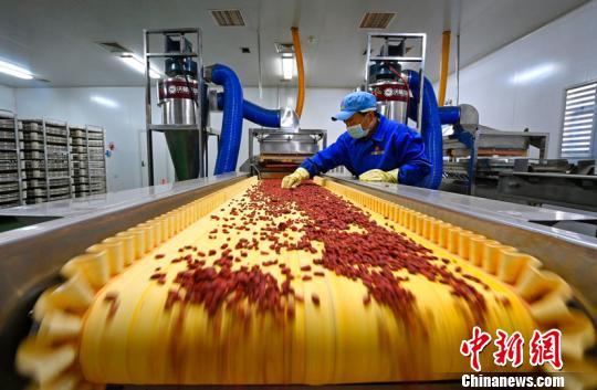 沃福百瑞生产车间枸杞干果生产线。 额丽其格 摄