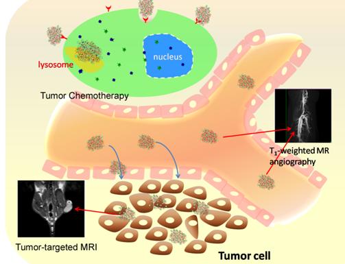 合肥研究院等在氧化石墨烯基磁共振纳米诊疗剂研究中取得进展