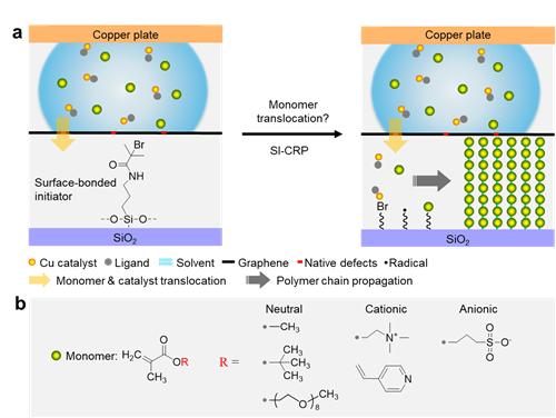 宁波材料所在聚合诱导单体穿透单层石墨烯研究方面取得重要进展
