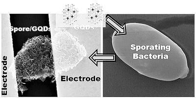 美研制出可监测湿度的微型生物机器人 环境适应能力极强 灵敏度比传统设备高10倍