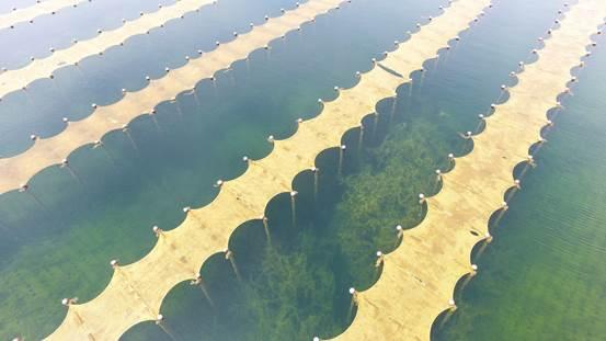 我国光催化技术提升饮用水源地水质工程应用研究获突破
