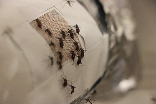 发热的衣服材料还能防止蚊子叮咬?石墨烯材料在防蚊上有双重保护作用